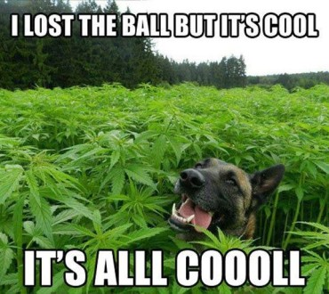 My Pooch Is A Stoner
