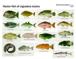 cfp_vectorfish